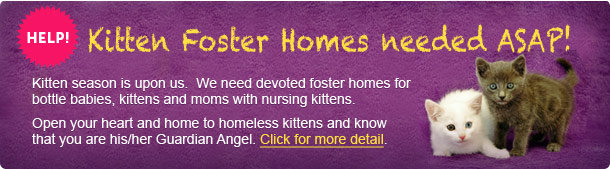 Kitten Foster Homes needed ASAP!