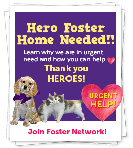 URGENT! Hero Foster Family Needed!