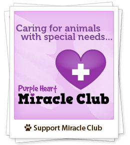 Caring for special need animals - Purple Heart Miracle Club