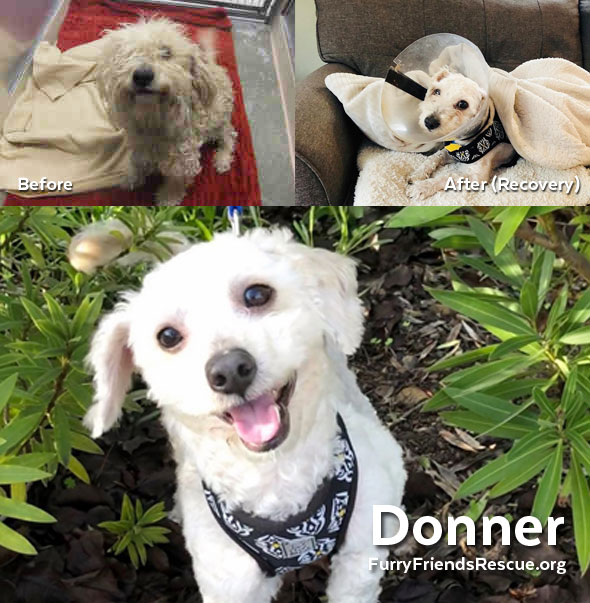 Donner before and after picture