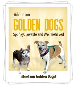 Spunky, Lovable and Well Behaved Experienced mature dogs, 8 yrs+